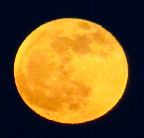 While the moon was low in the sky, it looked like this, with serious camera zoom.