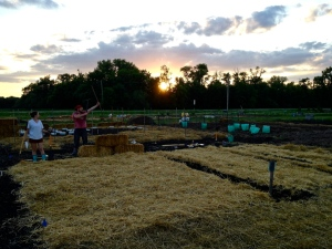 Planting at our Probstfield Farm plot in early June 2014. View to the west, the setting sun dropping behind the trees.